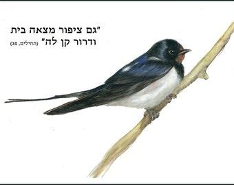 Bird of Israel - Barn Swallow