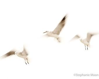 Seagull Print, Beach House Decor, Bird Photography, Wildlife Photography, Cottage Decor, High Key White Minimalist Photography