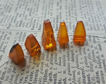 5 Natural Baltic Amber teeth beads, yellow genuine Baltic amber teeth