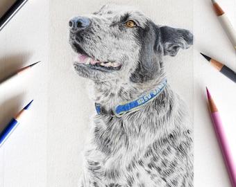 Custom Pet Portrait- Original Colored Pencil Drawing