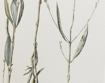 Original, Signed: Olive Branch Botanical Watercolour Painting