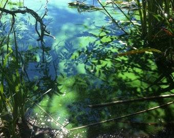 lake photography, lagoon, marsh photography, bayou, swamp, jungle photography, nature photography