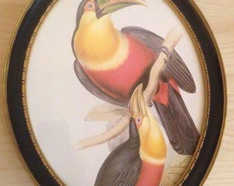 Vintage Toucan Pair Art in Black Oval Frame