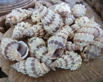 25 pce Flyspeck Cerith Spiral Sea Shell Beads Tribal Jewellery Craft