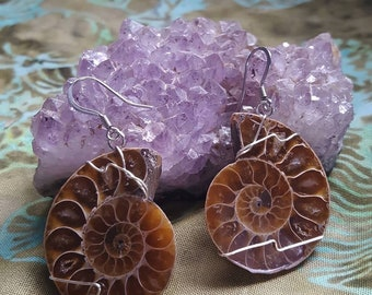 ammonite earrings
