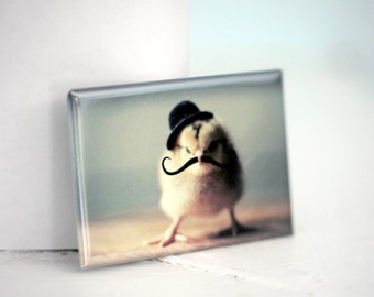 Chicks in Hats Chicken In A Bowler Hat And Mustache Rigid Rectangle Magnet Baby Animal Photograph
