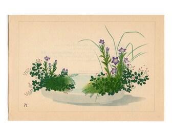 1933 IKEBANA FLOWER ARRANGEMENT Japanese botanical lithograph - original vintage print -platycodon bush clover & pampas grass  - moribana