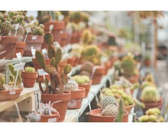 Cactus Photography Nature Photography Cactus Print Desert Decor Bright Decor Greenhouse Art Cactus Print Botanical Print Dreamy Photography
