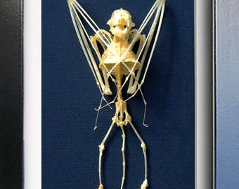 Bat Skeleton Real Vampire Scotophilus Kuhlii Taxidermy Museum Quality In Display