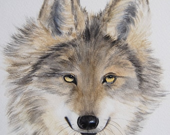 aquarelle originale, loup, animaux, art animalier, art, dessin animalier, aquarelle originale signée,naturaliste