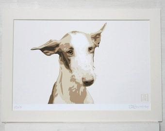 Ibizan Hound ART PRINT
