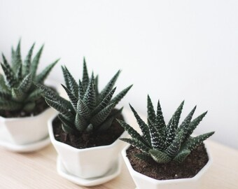 SET SAVINGS 20% OFF - Mini Octagon Planters  (Set of 3)