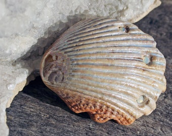 Handgefertigte Muschel Cabochon - Perlmutt-Perle Finish