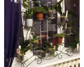 Planter. Wrought Iron Plant Stand for 12 pots, Iron Plant Stand Pot Holder, Hand forged plant holder, Flower pot holder, home iron art decor