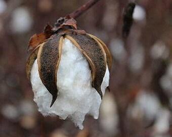 100% Organic Cotton Washcloth/ Handmade Pesticide-Free Washcloth/ Sensitive Skin Bath Cloth