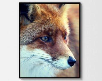 Red Fox Print - Digital Download - Scandinavian Nordic - Photography Minimal Wall Art