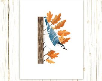 White-Breasted Nuthatch Print -- bird art -- colorful bird art 52 birds stephanie fizer coleman illustration
