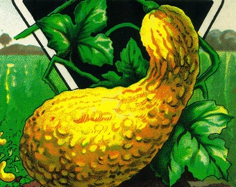 Squash (summer) - Vintage Seed Packet (Art Print - Multiple Sizes Available)