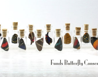 Real Butterfly Wing in a Jar - Fairy Bottle - Funds Conservation