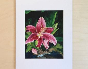 Pink Lilly art print