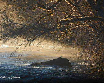 Nature Photography Matted 8x10 River