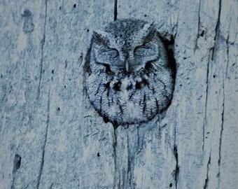 OWL Fine Art Photography