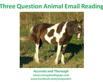 Three Question Animal Email Reading
