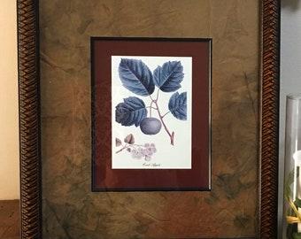 Set of 4 Vintage Botanical Prints