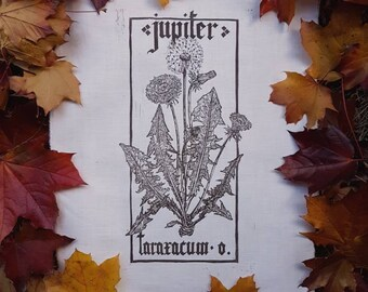 Jupiter-Taraxacum officinalis PLANHERBARIUM linocut Print