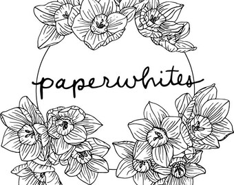 Paperwhites / Narcissus - Image Download