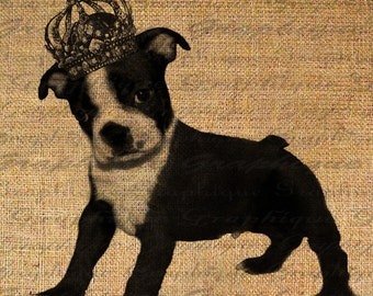 Adorable BOSTON TERRIER Puppy DOG Crown Digital Collage Sheet Download Burlap Fabric Transfer Iron On Pillows Totes Tea Towels No. 1321