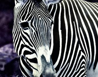Striped Fantasy - Zebra Art Print - Zebra Photograph - Black & White Zebra - Nature Art Print - Fantasy Zebra - Fantasy Art Print