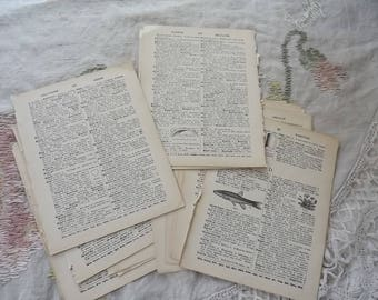 Vintage Dictionary Bundle (50) pages many illustrated