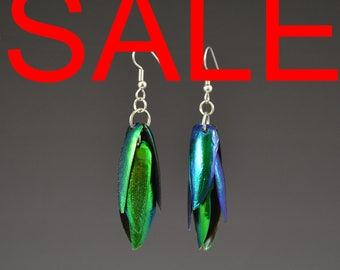Jewel Beetle Elytra  6 Wing Set, Natural Insect Jewelry Lightweight Earrings Beetle Wings Iridescent Green Earrings