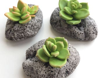 succulent hand made,plant,polymer clay,composition, flower,gift,miniature,home decor,succulent clay,plant artificial,stone flower,cactus