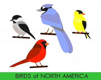 Cute Bird Clipart, Birds of North America, Cardinal Clipart, Blue Jay Clipart, Digital Chickadee, Printable Goldfinch Clipart