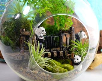 "Pandas on Suspension Bridge ~ 8"" Air Plant Terrarium Kit ~ 2 Air Plants ~ 4 Pandas ~ Nature Terrarium Kit ~ Wildlife ~ Zoo Keeper ~  Gift"