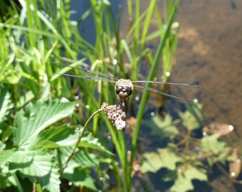 Dragonfly, Nature Photography
