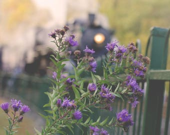 Train, locomotive, steam engine, flowers, purple flowers, perspective, photograph, print, home, decor, wall, art