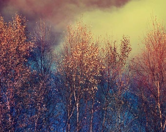 Nature Photography, Trees, Leaves, Moody, Autumn, Winter Sky, Blue, Copper, Gold.