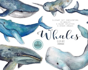 Whale clip art, watercolor whales painted by hand, ocean clip art,  21 clipart 300 dpi PNG files