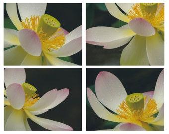 Set of Four 8 x 10 Elegant lotus  Photographs - Floral Wall Decor - Nature Flower - Lotus Garden - Lotus In Rain -  Nature Photograph