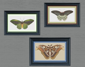 Wings Pattern Collection - Set of 3 - Counted Cross Stitch Patterns - Booklet - PDF Instant Digital Download
