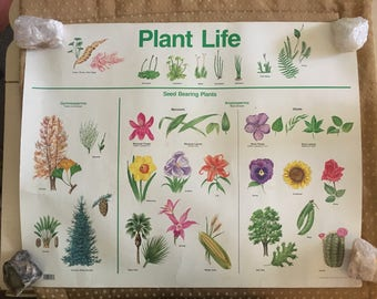Lovely Vintage 1985 Plant Life Teaching Aid Poster. Science. Botany