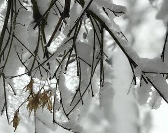 L'hiver #12 congelé arbre branche panoramiques hiver photo
