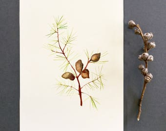 Australian native flora, botanical print, Hakea print, watercolour painting,