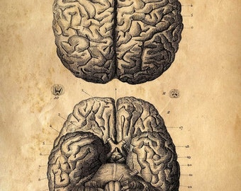 Anatomy Brains Vintage poster reproduction. Human Body. Zombies Horror Science Biology Educational diagram chart pull down chart- CP102