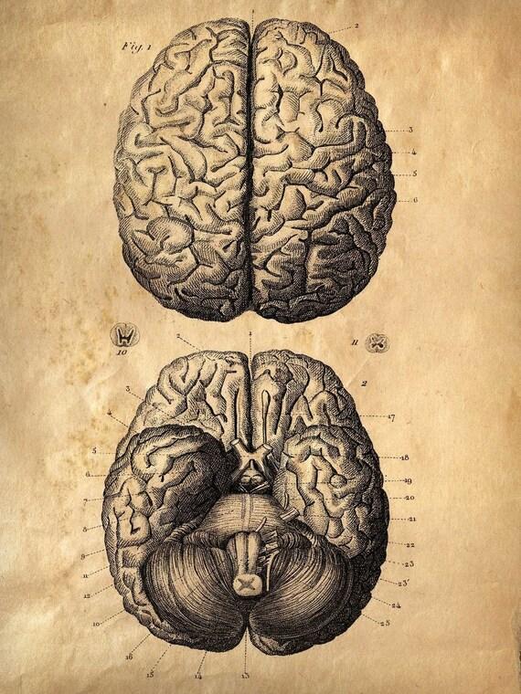 Reproducción de cartel de cerebros Vintage de anatomía. Cuerpo