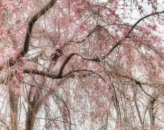 Blooming Branches Square Fine Art Photograph pink green white botanical