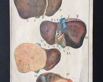 Antique French Anatomy Bookplate Print 1910 DISSECTION Medical Diagram